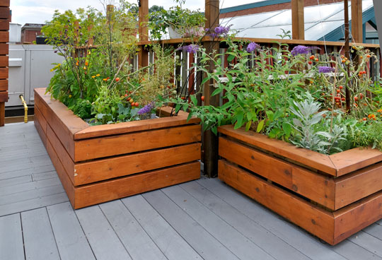 Raised Bed Gallery