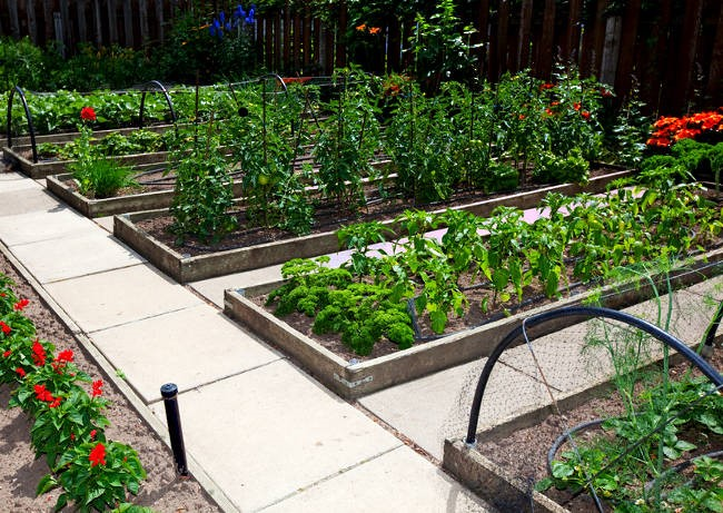 Forsyth Structures Raised Bed Garden Builder In Winston Salem